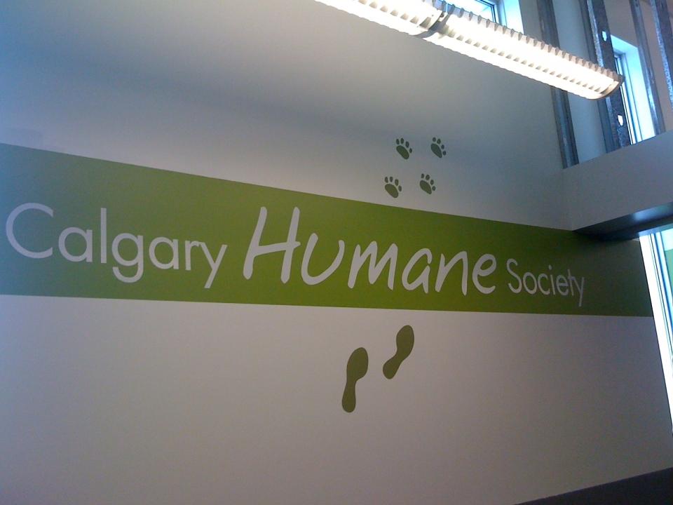 Calgary Humane Society wall vinyl